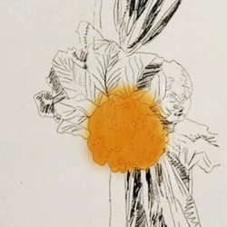 Flowers (Hand Coloured) FS…